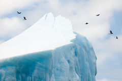 Birds and iceberg. Birds flying behind a very huge iceberg Royalty Free Stock Photo