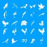 Birds icon blue set vector Stock Photography
