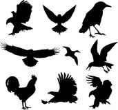 Birds icon set Stock Photo