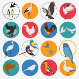 Birds icon set. Vector flat style Stock Photos