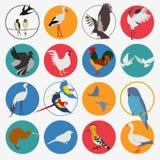 Birds icon set. Vector flat style Stock Photos