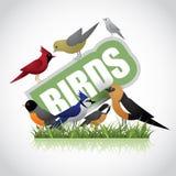 Birds icon  on white Royalty Free Stock Photo