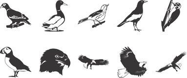 Birds icons Royalty Free Stock Image