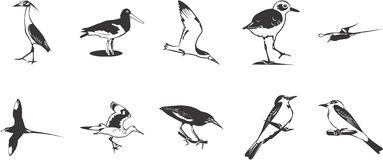 Birds icons set. Collection of black and white illustrations depicting various birds Royalty Free Stock Photos