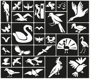 Birds icons Royalty Free Stock Images