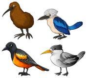 Birds Royalty Free Stock Image