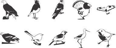 Birds illustrations. Collection of black and white illustrations depicting various birds Stock Photo