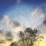 Birds immigration. At sunset time Royalty Free Stock Images