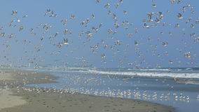 Birds In Flight In A Beach At The South Of Lima Royalty Free Stock Photo