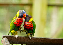 Free Birds In Love Stock Photos - 32005933