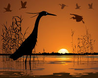 Free Birds In Sunset Swamp Illustration Royalty Free Stock Photos - 37777448