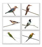 Birds of India Royalty Free Stock Photo
