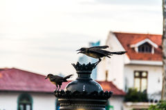 Birds interacting standing in an electric lamp - Panama City, Panama. Birds interacting standing in an electric lamp in Panama City, Panama Royalty Free Stock Images