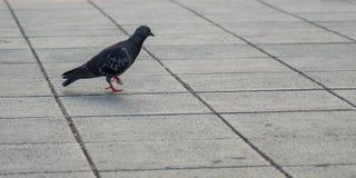 Birds are invading the human habitation. Birds are invading the human habitation stock images