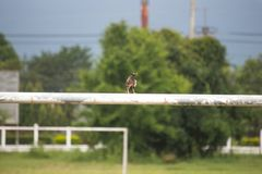 A bird on the gates of the football goal royalty free stock photos