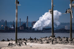 Birds island on the industrial background Stock Photos
