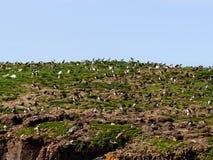 Birds island Stock Photography