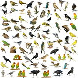 Birds isolated on white Set of 81 photographs Royalty Free Stock Photography