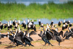 Birds by Jipe Lake, Kenya Stock Photos