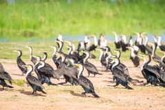 Birds by Jipe Lake, Kenya Royalty Free Stock Photo