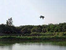 Birds in JN Ding Darling National Wildlife Refuge in Florida Stock Images