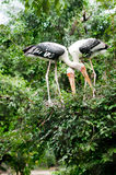 Birds in the jugle. Two Birds in the jungle ,we found them find food for lunch Royalty Free Stock Photos
