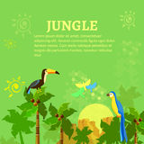 Birds in the jungle toucan and parrot Stock Photography