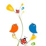 Birds and ladybirds Stock Photos