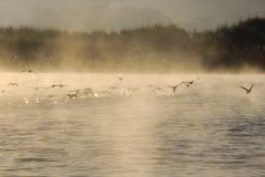 Birds on lake Royalty Free Stock Photo