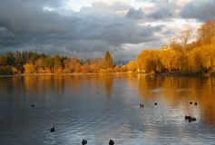 Birds on a lake in late afternoon. Birds on a lake in the late afernoon, with sun setting and giving warm colors. Marina in the far background. Vancouver, Canada stock photo