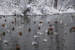 Birds on lake Stock Photos
