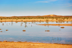 Birds in the lake of oasis in Sahara desert Stock Photos