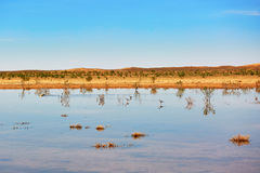 Birds in the lake of oasis in Sahara desert Stock Photo