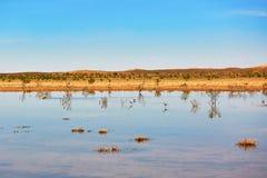 Birds in the lake of oasis in Sahara desert Stock Photo