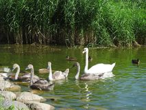 Birds on lake shore, Lithuania Stock Image