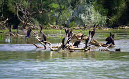 Birds on lake trees Stock Image