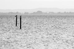 Birds on a lake. Two seagulls on poles on a lake, with distant hills in the background and very soft tones stock photo
