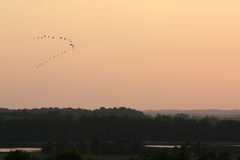 Birds leaving. A sunset with birds flying Royalty Free Stock Photo