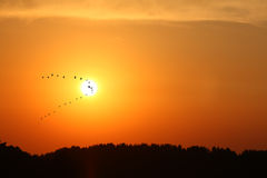 Birds leaving. A sunset with birds flying stock image