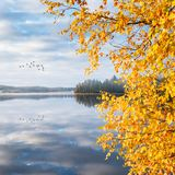 Birds leaving to south with autumn landscape Stock Photo