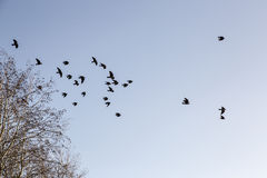Birds Leaving Tree in Winter Royalty Free Stock Photography