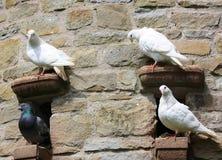 Birds on a ledge Royalty Free Stock Photos