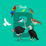 Birds with Letter B . ABC, Alphabet. Birds with letter B on green. Dove parrot eagle ostrich cockatoo hawk. Different birds kinds. Collection of aves. Part of vector illustration