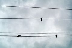 Birds on light wires. The birds on light wires Stock Images