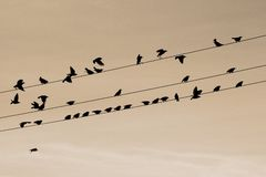 Birds in a line Stock Photos