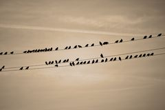 Birds in a line Royalty Free Stock Images