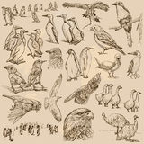Birds. Line art vector. Pack. Stock Photography