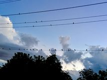 Birds in Line. Birds sitting on utility lines in Chicago Stock Photos
