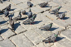 Birds lives. In the natural environment Royalty Free Stock Photography