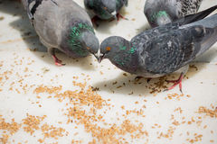 Birds lives. In the natural environment Stock Photo